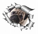 Ripped Torn Metal Design With Cute Pug Dog Sad Eyes Motif External Vinyl Car Sticker 105x130mm